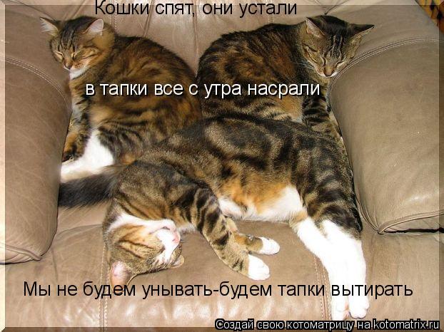 Котоматрица: Кошки спят, они устали в тапки все с утра насрали Мы не будем унывать-будем тапки вытирать