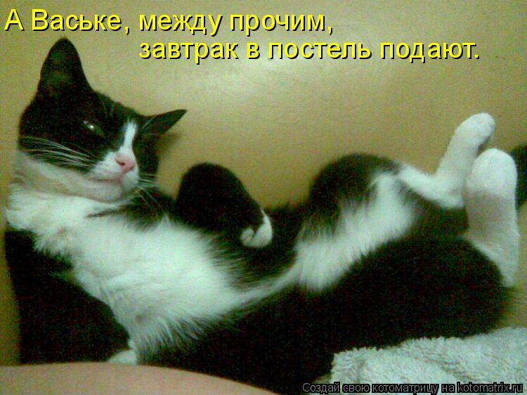 Котоматрица: А Ваське, между прочим, завтрак в постель подают.