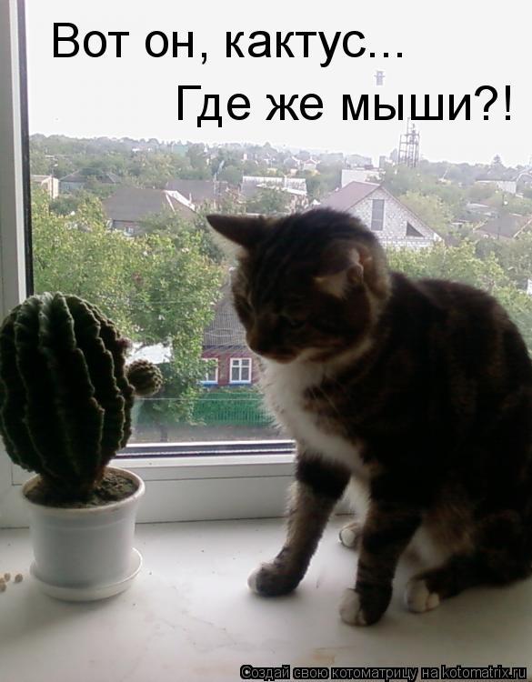 Котоматрица: Вот он, кактус... Где же мыши?!