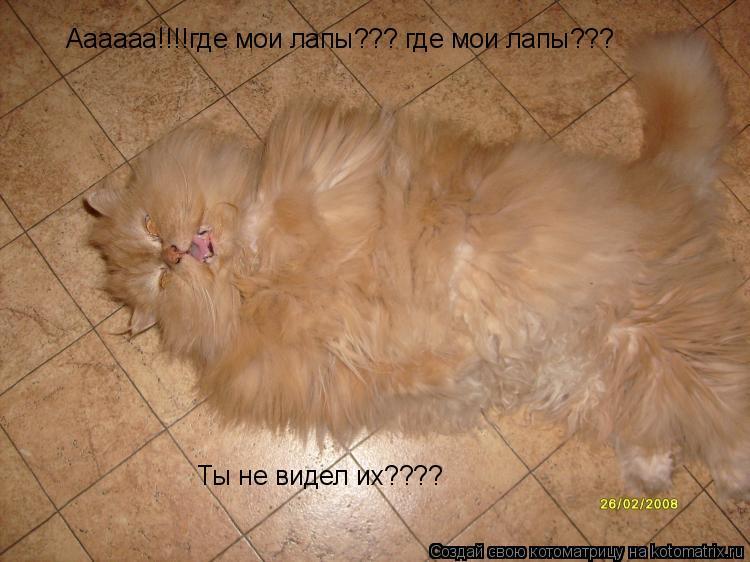 Котоматрица: Аааааа!!!!где мои лапы??? где мои лапы??? Ты не видел их????