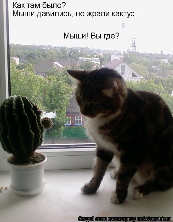 Котоматрица: Как там было? Мыши давились, но жрали кактус... Мыши! Вы где?