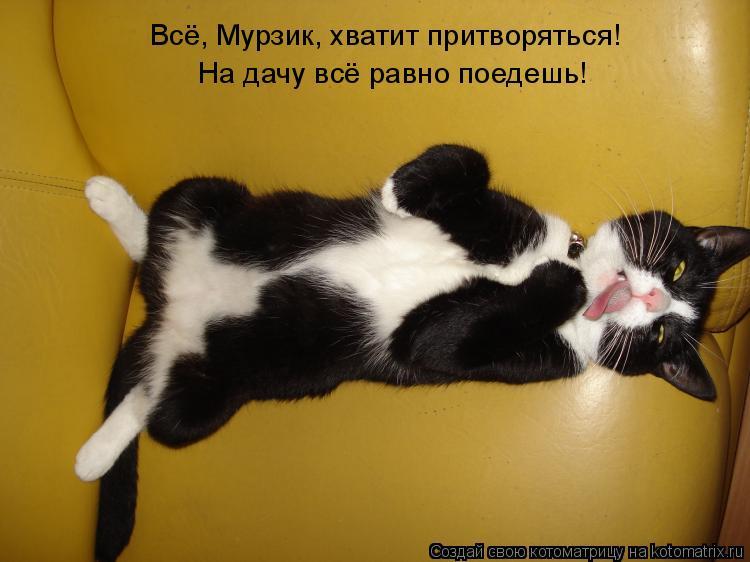 Котоматрица: Всё, Мурзик, хватит притворяться!  На дачу всё равно поедешь!