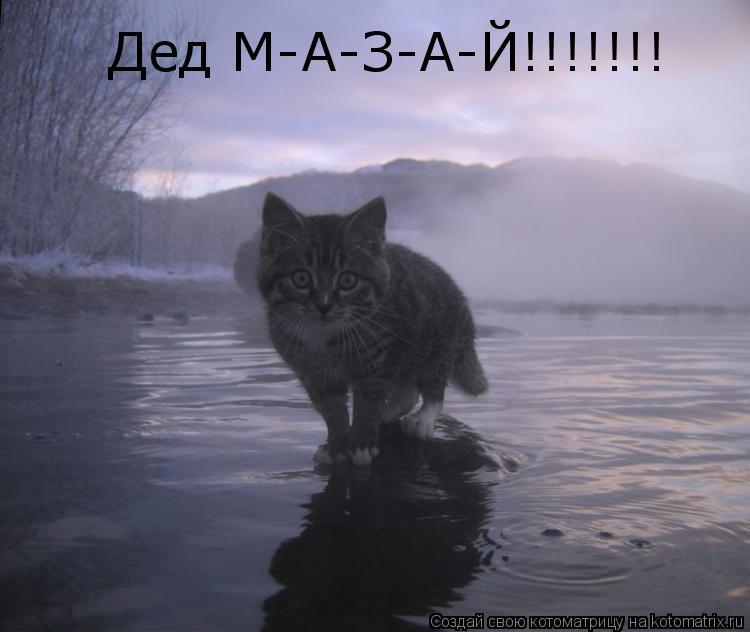 Котоматрица: Дед М-А-З-А-Й!!!!!!!