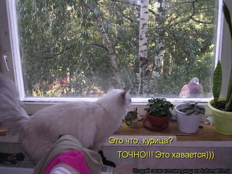 Котоматрица: Это что, курица? ТОЧНО!!! Это хавается)))