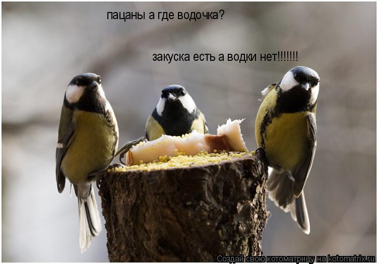 Котоматрица: пацаны а где водочка? закуска есть а водки нет!!!!!!!