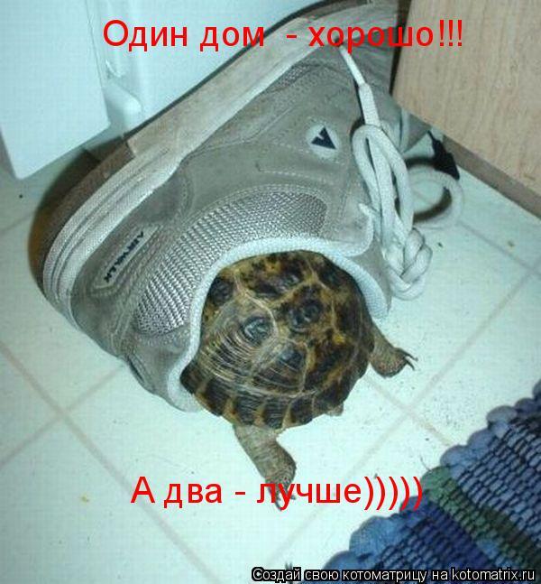 Котоматрица: Один дом  - хорошо!!! А два - лучше)))))