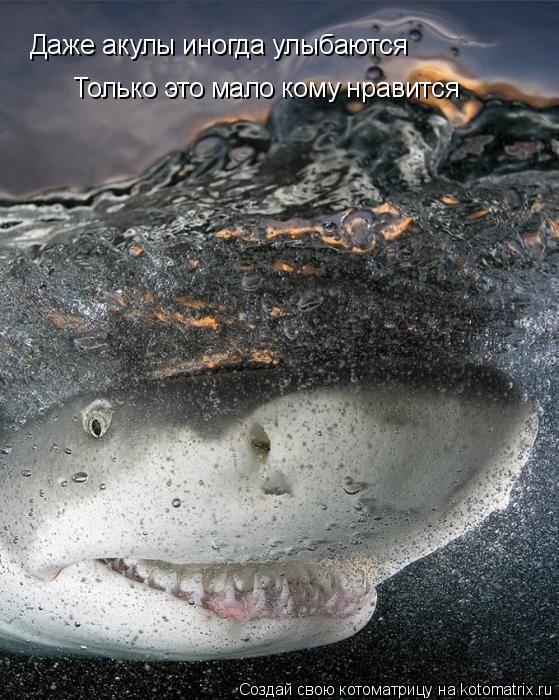 Котоматрица: Даже акулы иногда улыбаются Только это мало кому нравится