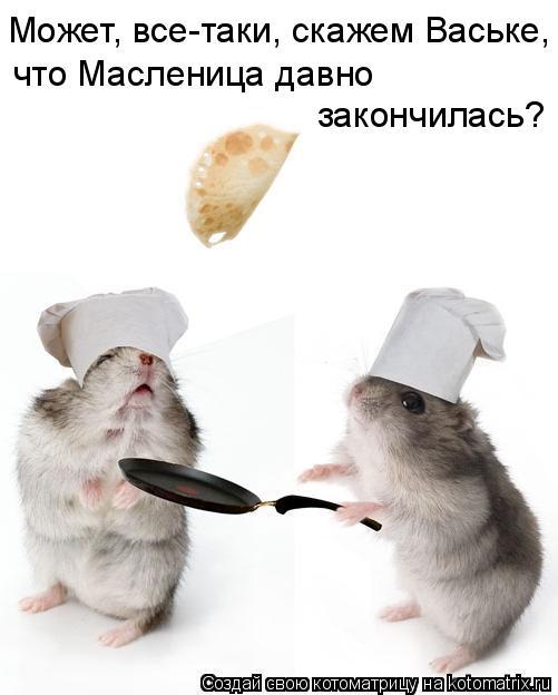 Котоматрица: Может, все-таки, скажем Ваське, что Масленица давно  закончилась?