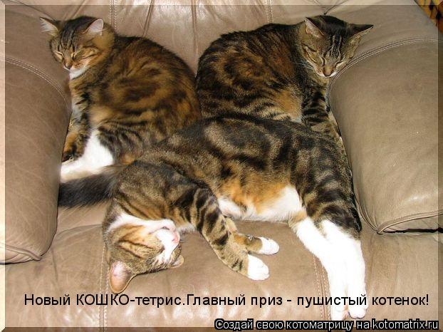 Котоматрица: Новый КОШКО-тетрис.Главный приз - пушистый котенок!