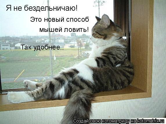 Котоматрица: Я не бездельничаю! Это новый способ  мышей ловить! Так удобнее..