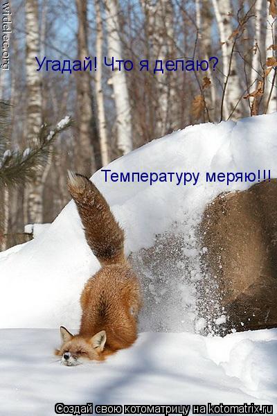 Котоматрица: Угадай! Что я делаю?  Температуру меряю!!!