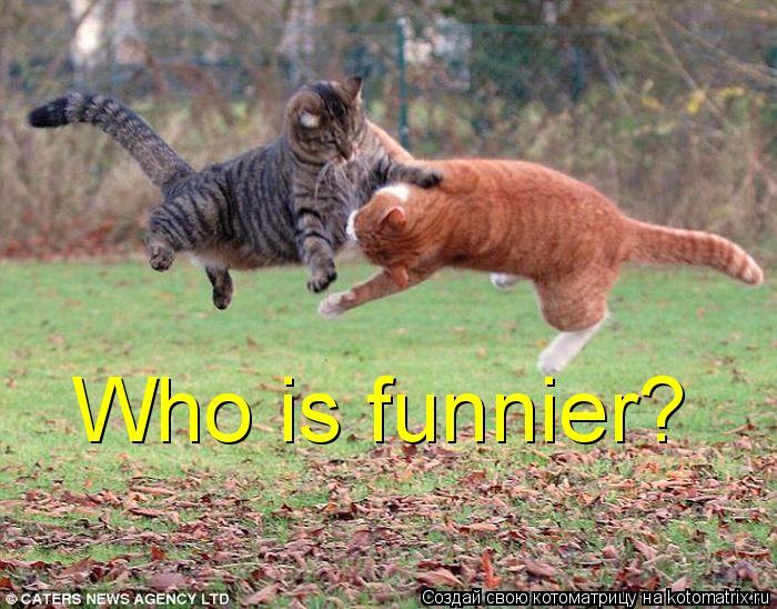 Котоматрица: Who is funnier?