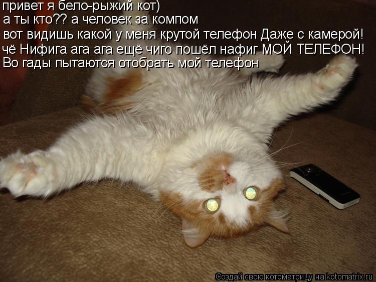 Котоматрица: привет я бело-рыжий кот) а ты кто?? а человек за компом вот видишь какой у меня крутой телефон Даже с камерой! чё Нифига ага ага ещё чиго пошёл
