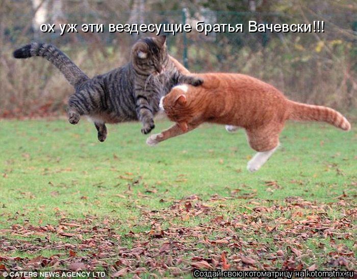 Котоматрица: ох уж эти вездесущие братья Вачевски!!!