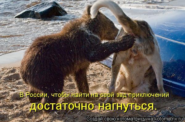 Котоматрица: В России, чтобы найти на свой зад приключений достаточно нагнуться.