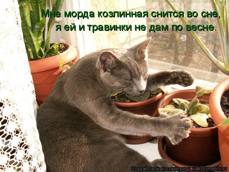 Котоматрица: Мне морда козлинная снится во сне, я ей и травинки не дам по весне.