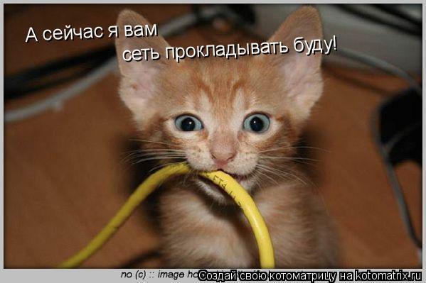 Котоматрица: А сейчас я вам сеть прокладывать буду!