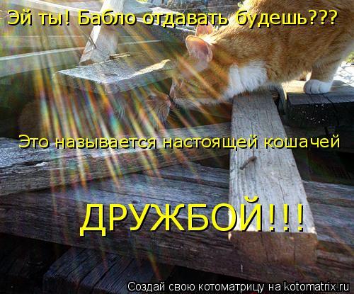 Котоматрица: Эй ты! Бабло отдавать будешь??? Это называется настоящей кошачей  ДРУЖБОЙ!!!