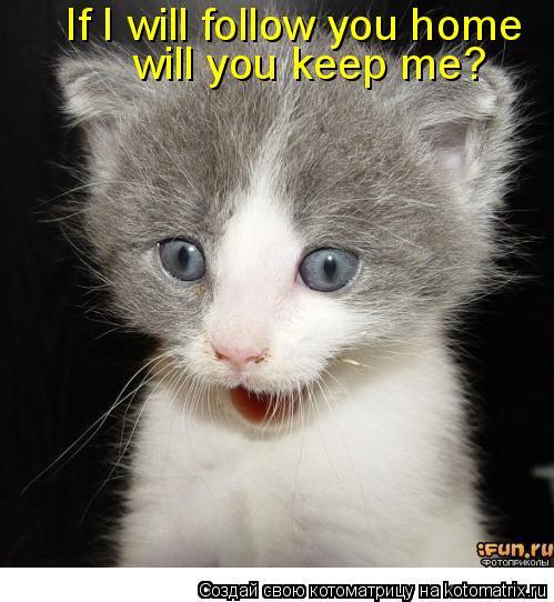 Котоматрица: If I will follow you home   will you keep me?