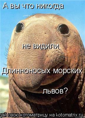 Котоматрица: А вы что никогда не видили Длинноносых морских львов?