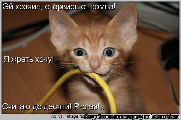 Котоматрица: Эй хозяин, оторвись от компа! Я жрать хочу! Считаю до десяти! Р-р-аз!...