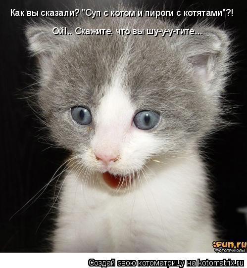 """Котоматрица: Как вы сказали? """"Суп с котом и пироги с котятами""""?! Ой!.. Скажите, что вы шу-у-у-тите..."""
