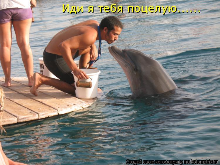 Котоматрица: Иди я тебя поцелую......