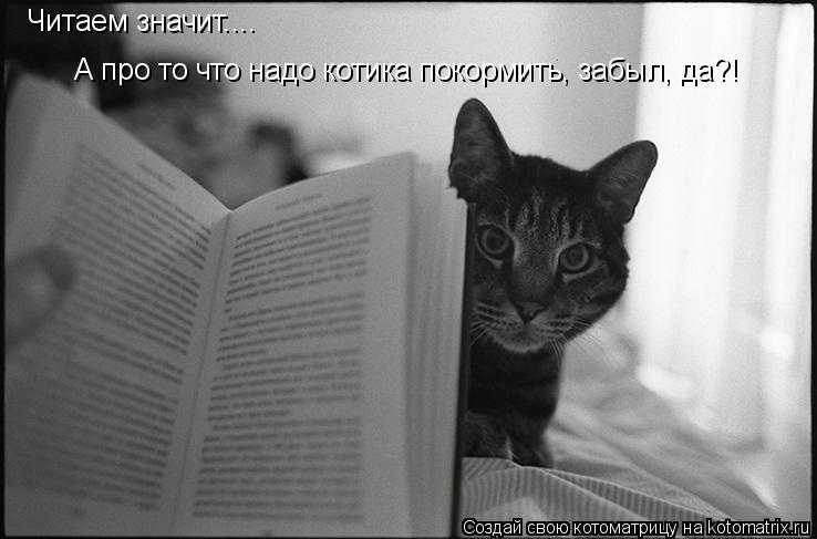 Котоматрица: Читаем значит.... А про то что надо котика покормить, забыл, да?!