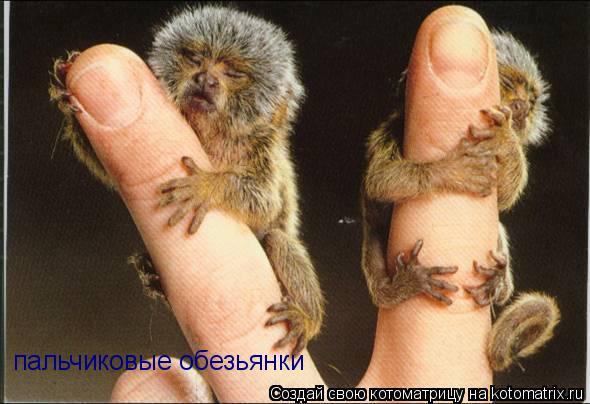 Котоматрица: пальчиковые обезьянки