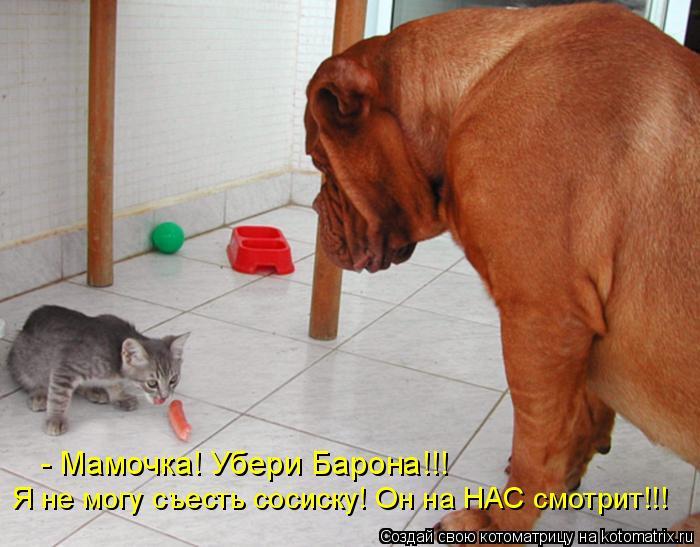 Котоматрица: - Мамочка! Убери Барона!!! Я не могу съесть сосиску! Он на НАС смотрит!!!