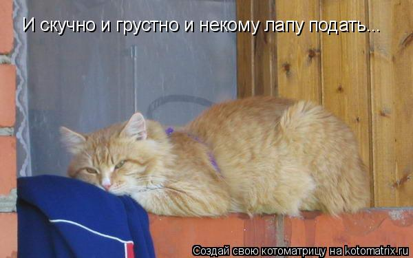 Котоматрица: И скучно и грустно и некому лапу подать...