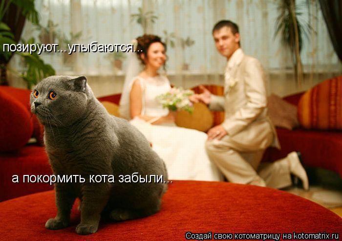 Котоматрица: позируют...улыбаются... а покормить кота забыли...
