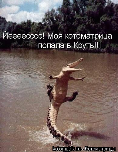 Котоматрица: Йеееесссс! Моя котоматрица попала в Круть!!!
