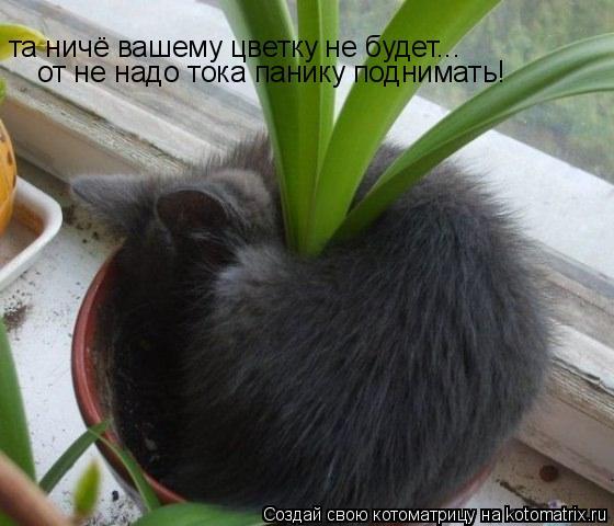 Котоматрица: та ничё вашему цветку не будет... от не надо тока панику поднимать!