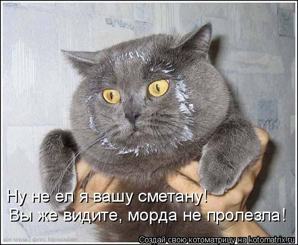Котоматрица: Ну не ел я вашу сметану!  Вы же видите, морда не пролезла!