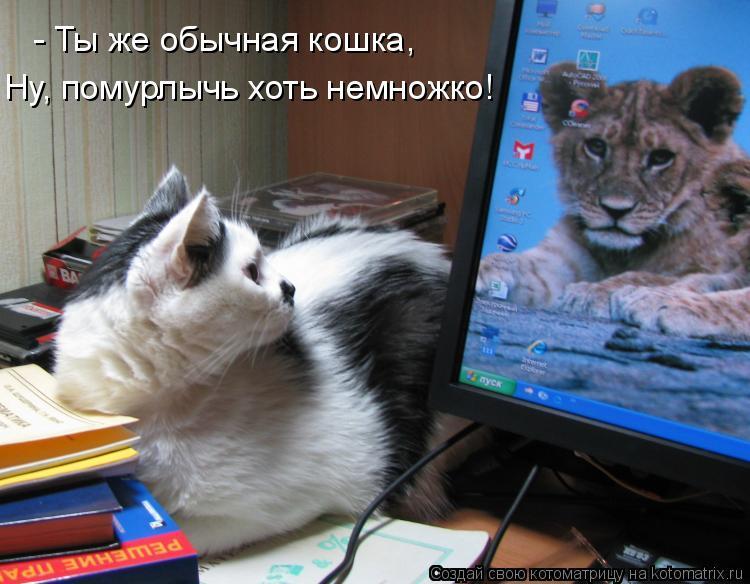 Котоматрица: - Ты же обычная кошка, Ну, помурлычь хоть немножко!