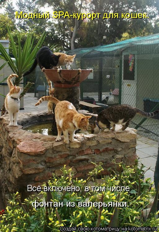 Котоматрица: Всё включено, в том числе фонтан из валерьянки. Модный SPA-курорт для кошек.