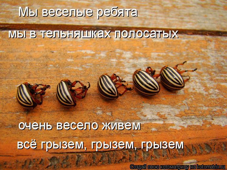 Котоматрица: Мы веселые ребята мы в тельняшках полосатых очень весело живем всё грызем, грызем, грызем