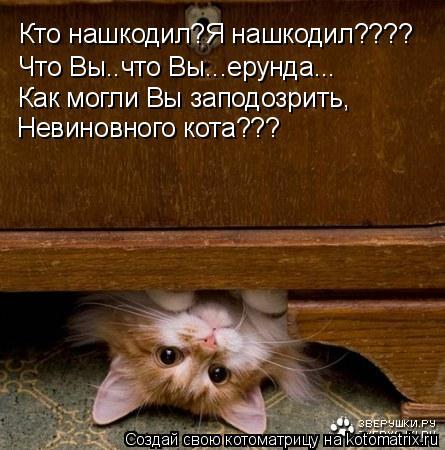 Котоматрица: Кто нашкодил?Я нашкодил???? Что Вы..что Вы...ерунда... Как могли Вы заподозрить, Невиновного кота???