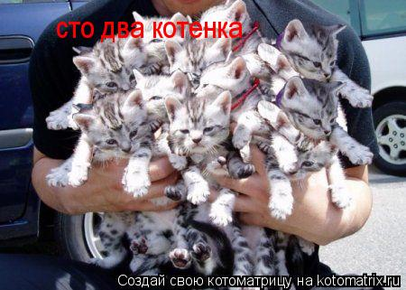 Котоматрица: сто два котенка