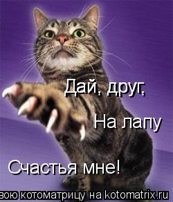 Котоматрица: Дай, друг, Дай, друг, Счастья мне! На лапу