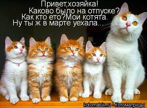Котоматрица: Привет,хозяйка! Каково было на отпуске? Как кто ето?Мои котята. Ну ты ж в марте уехала...