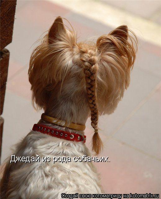 Котоматрица: Джедай из рода собачьих.