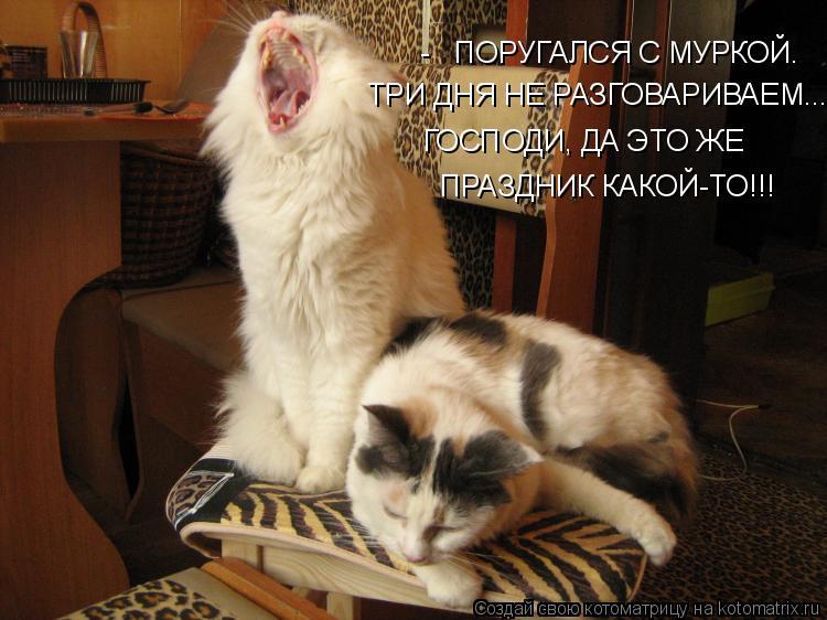 Котоматрица: -   ПОРУГАЛСЯ С МУРКОЙ.  ТРИ ДНЯ НЕ РАЗГОВАРИВАЕМ... ГОСПОДИ, ДА ЭТО ЖЕ ПРАЗДНИК КАКОЙ-ТО!!!