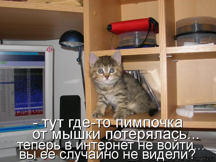Котоматрица: - тут где-то пимпочка  от мышки потерялась... теперь в интернет не войти...  вы ее случайно не видели?