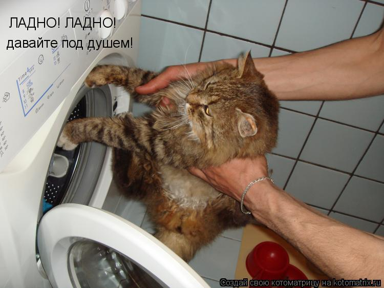 Котоматрица: ЛАДНО! ЛАДНО!  давайте под душем!