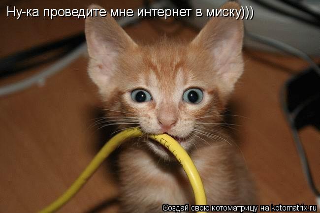 Котоматрица: Ну-ка проведите мне интернет в миску)))