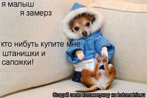 Котоматрица: я замерз кто нибуть купите мне  я малыш штанишки и сапожки!