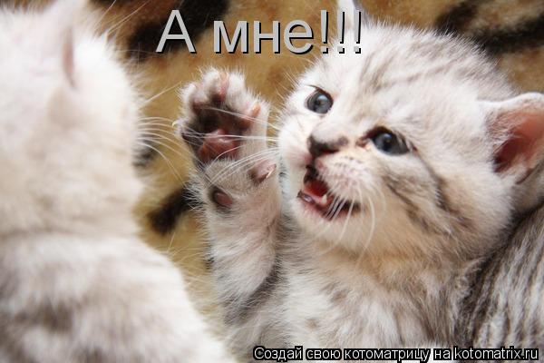 Котоматрица: А мне!!!