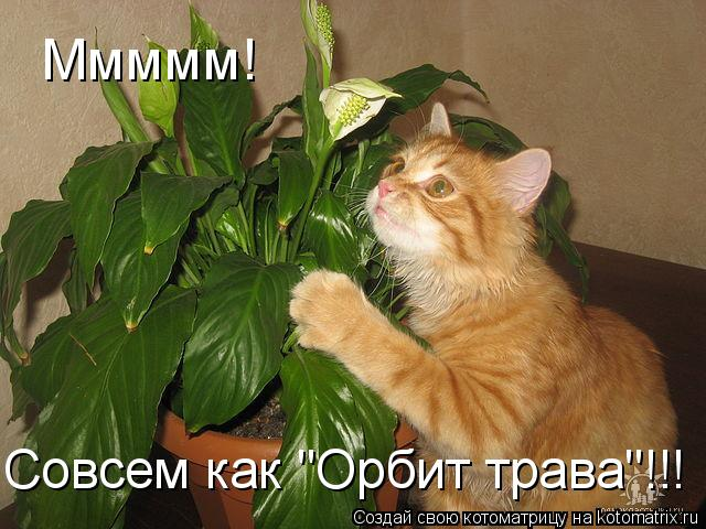 "Котоматрица: Ммммм! Совсем как ""Орбит трава""!!!"